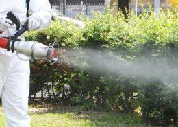 Adalar Belediyesi İlaçlama, Adalar Belediyesi Böcek İlaçlama | Lora Temizlik İlaçlama