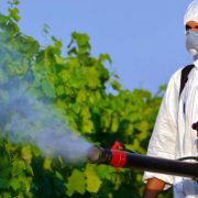 Yeşilköy Böcek İlaçlama Şirketi, Yeşilköy İlaçlama, Yeşilköy Pire İlaçlama, Yeşilköy Haşere İlaçlama, Yeşilköy Hamam Böceği İlaçlama
